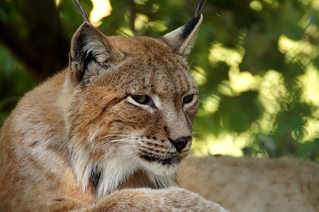 Expressions animales: explications des usages courants