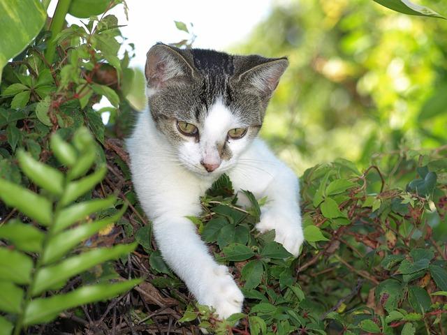 Avortement raconté par une petite chatte : très émouvant !